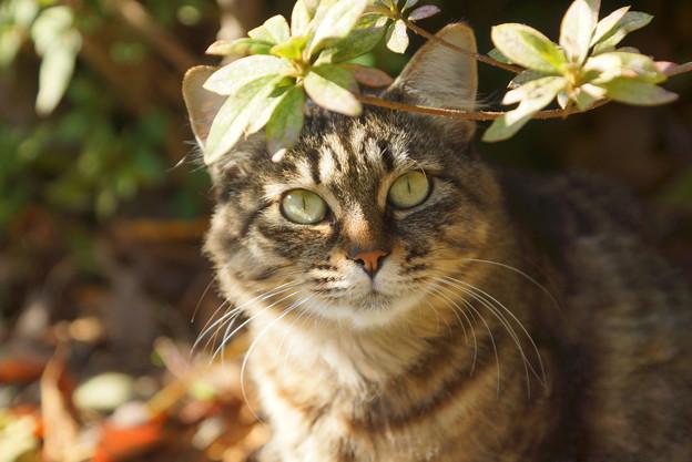 めかりの猫