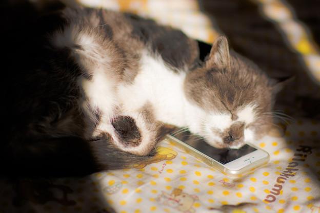 iPhone枕大好き