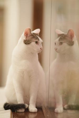 シンメトリー猫さん