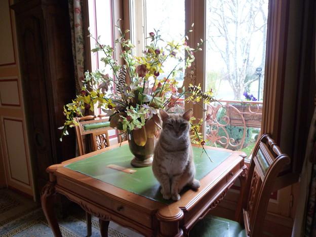 プロヴァンスのレストランの猫