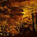 夕焼けの渚・紅葉まつり