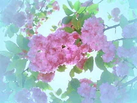カデンツァ_花