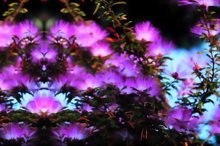 花合歓の夢-03