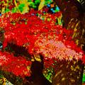 紅葉~お遊び(で縮小s)