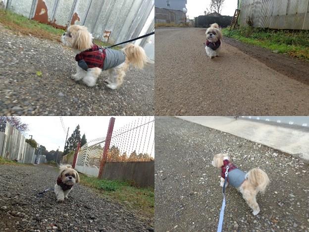 千葉散歩2