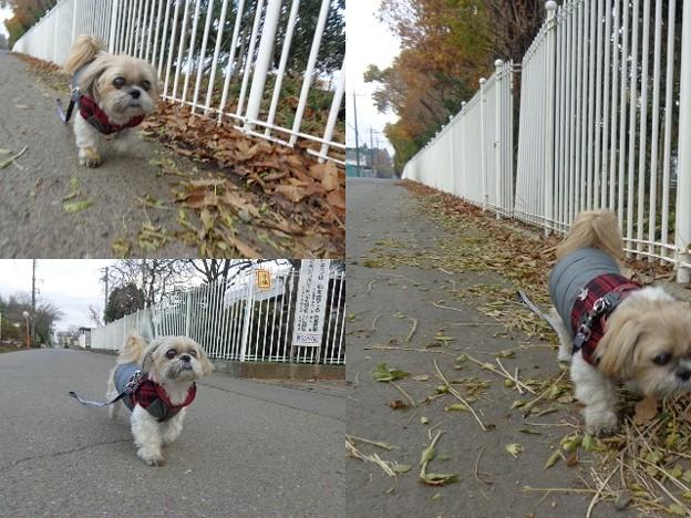 千葉散歩4