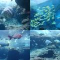 写真: 美ら海水族館4