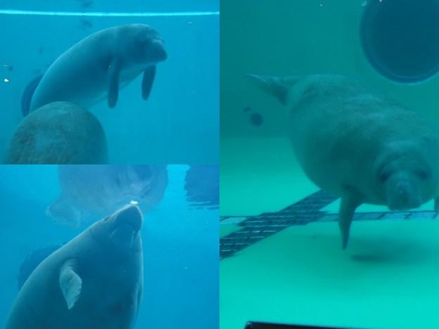 写真: 美ら海水族館6