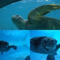写真: 美ら海水族館7
