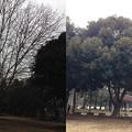 写真: 砧公園