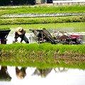 Photos: 田植えの風景