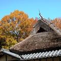 里の晩秋風景12