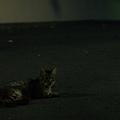 Photos: 夜の野良猫