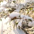 初雪の朝 03