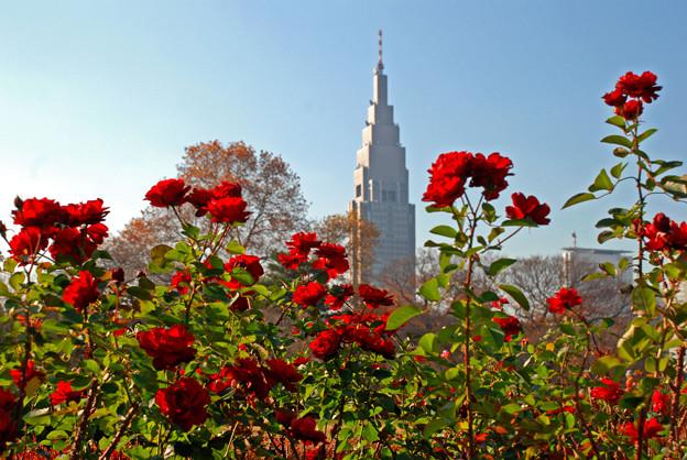 バラとドコモタワー