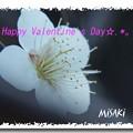 写真: バレンタイン7