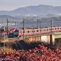 Photos: 河津桜と銀千