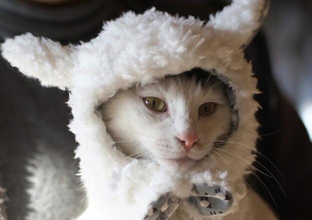 選外猫(ミサ)