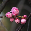 咲き始めました。