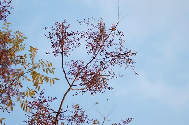 爛心木(ランシンボク)