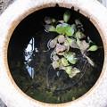 Photos: メダカ用火鉢