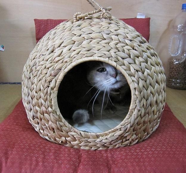 猫の住まい