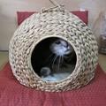 Photos: 猫の住まい