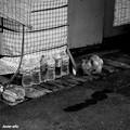 Photos: 街猫564