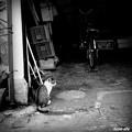 写真: 街猫569