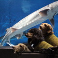 サメさんとパチリ