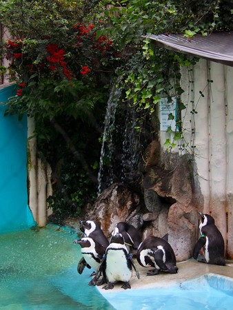 20141108 上野 ペンギンの秋02