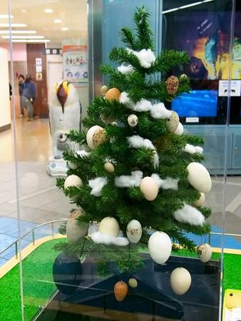 20141213 多摩 たまごツリー