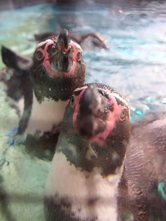 20141205 森きらら ペンギン館25