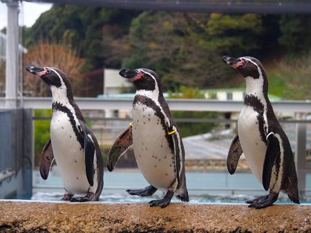 20141205 森きらら ペンギン館32