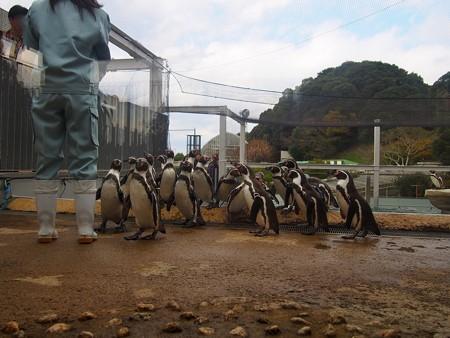20141205 森きらら ペンギン館29