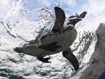 20141205 森きらら ペンギン館56