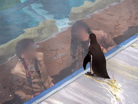 20141205 森きらら ペンギン館66