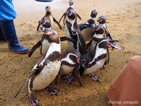 20141206 長崎 ペンギンビーチ02