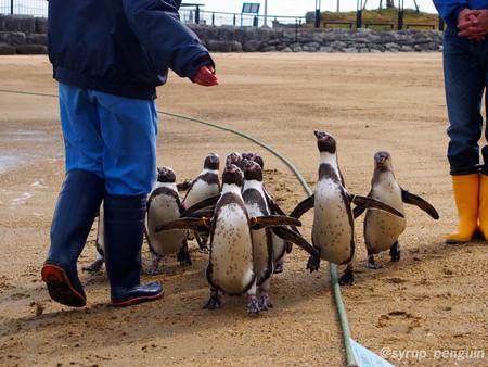 20141206 長崎 ペンギンビーチ08