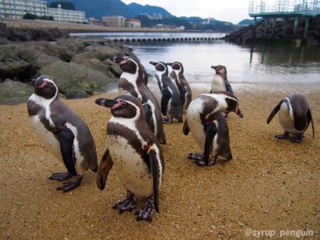 20141206 長崎 ペンギンビーチ06