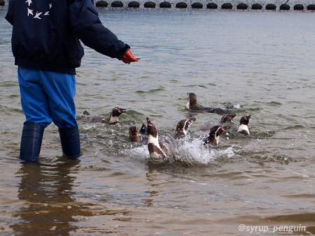 20141206 長崎 ペンギンビーチ14