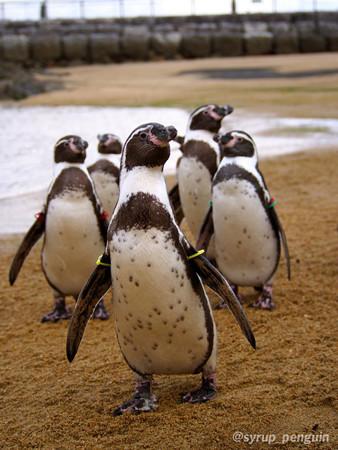 20141206 長崎 ペンギンビーチ19