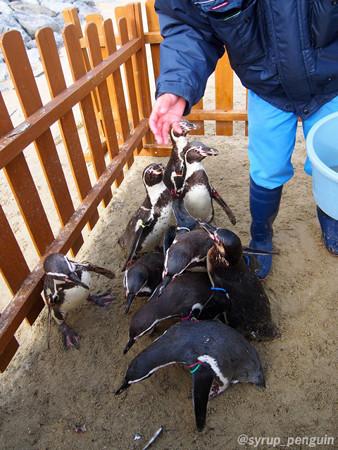 20141206 長崎 ペンギンビーチ35