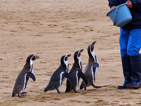 20141206 長崎 ペンギンビーチ33