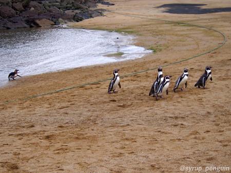 20141206 長崎 ペンギンビーチ30