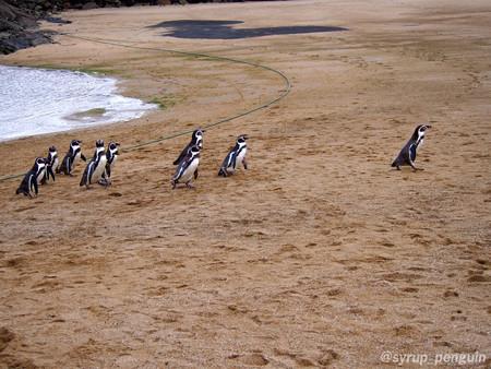 20141206 長崎 ペンギンビーチ29