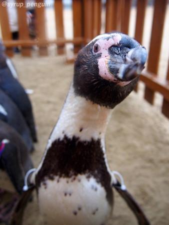 20141206 長崎 ペンギンビーチ44