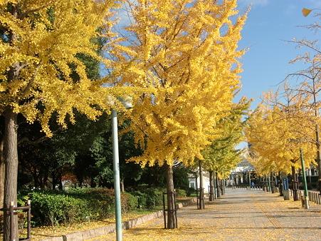 中央線朝潮橋駅への秋模様