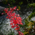 Photos: 川辺の紅葉