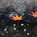 石灯籠の紅葉